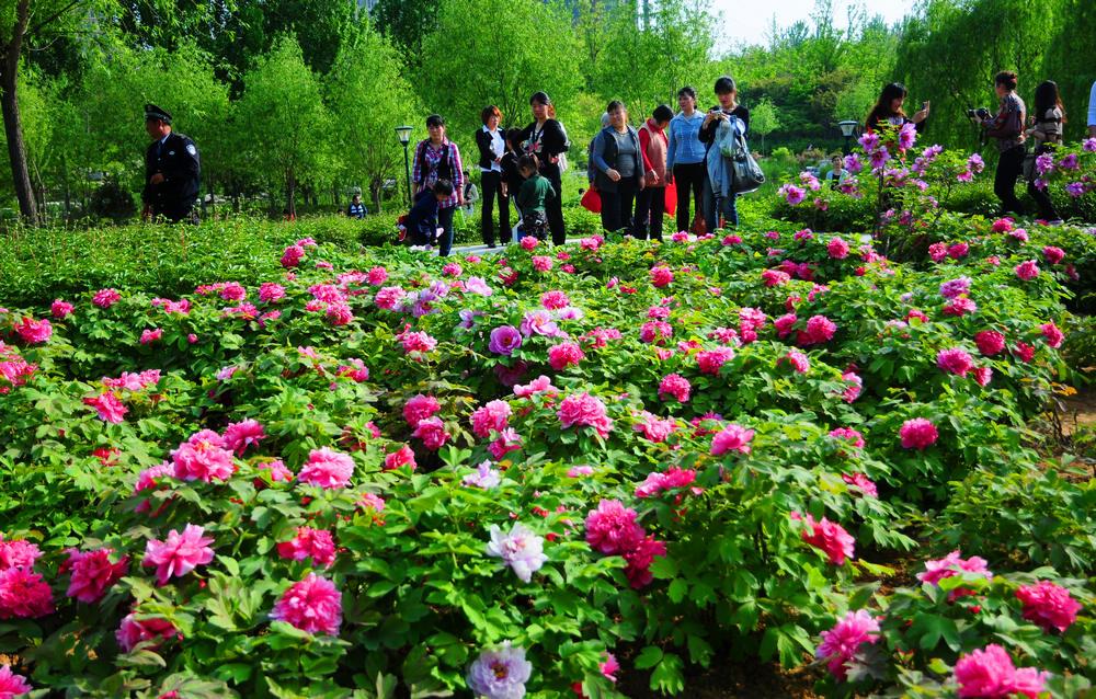 植物园之春 - 潍坊市摄协官方论坛 - 齐鲁社区 齐鲁