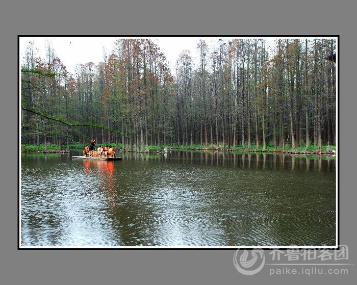 兴化水上森林公园图片
