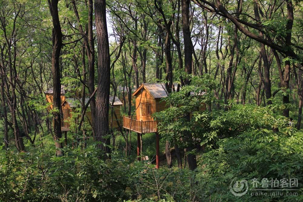 仰天山森林中的木屋