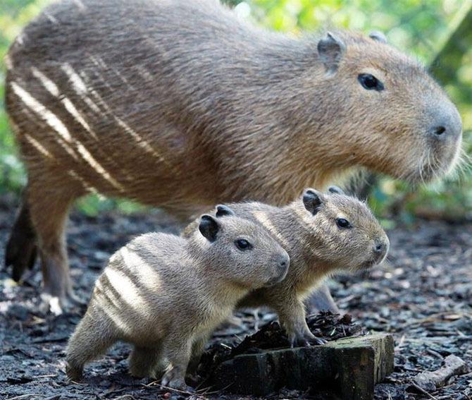 可爱的动物摄影