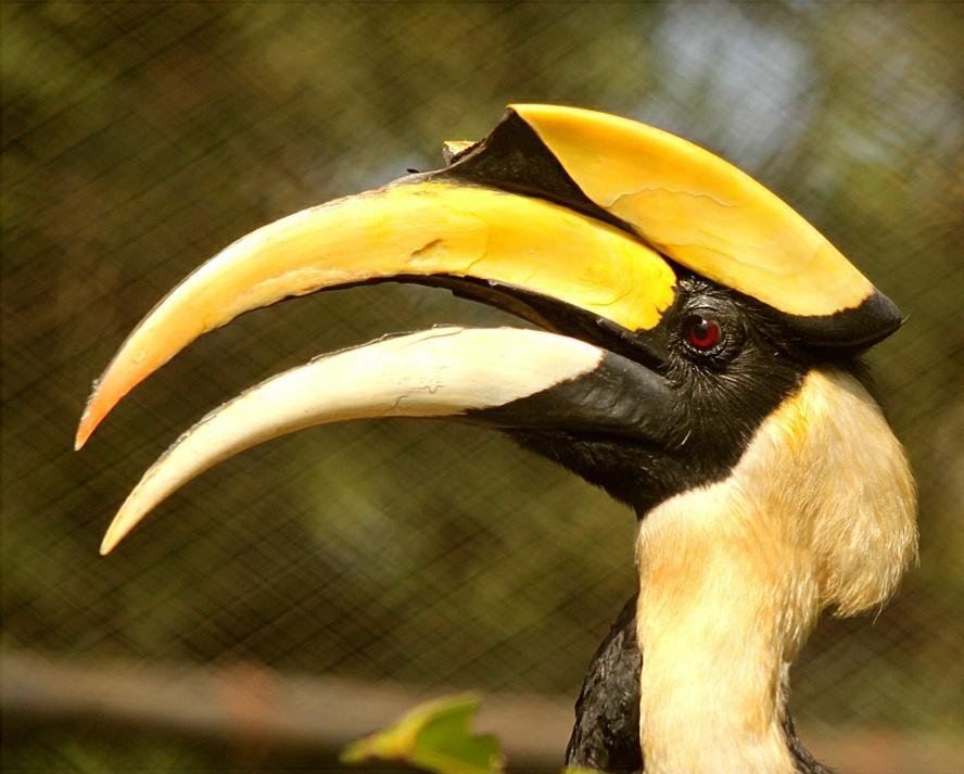 野生动物合集(二十四)大嘴鸟,犀鸟