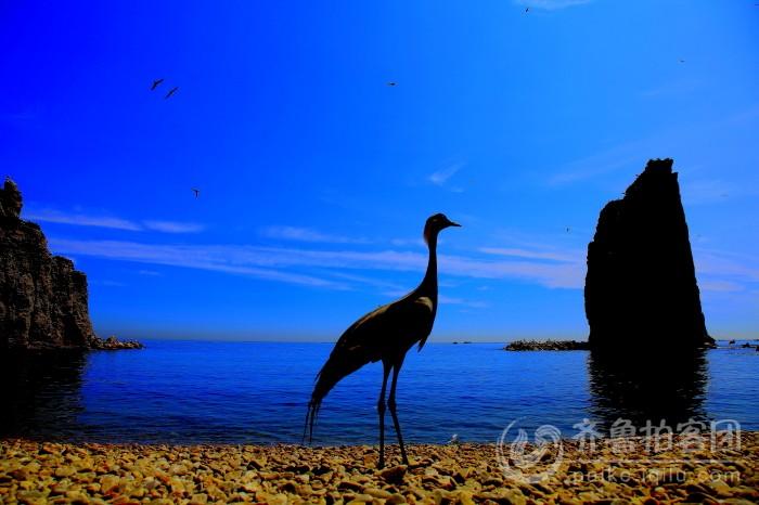 海驴岛的早晨 - 威海拍客 - 齐鲁社区 - 山东最大的,.