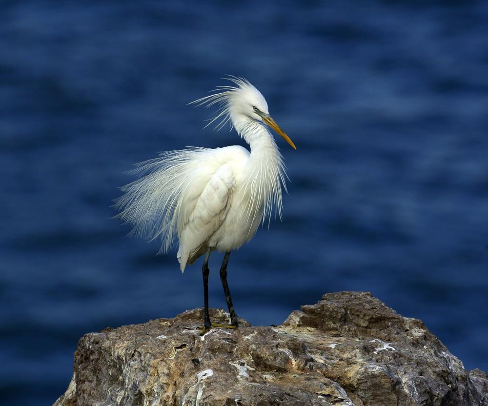 亦被列入国家重点保护野生动物名录