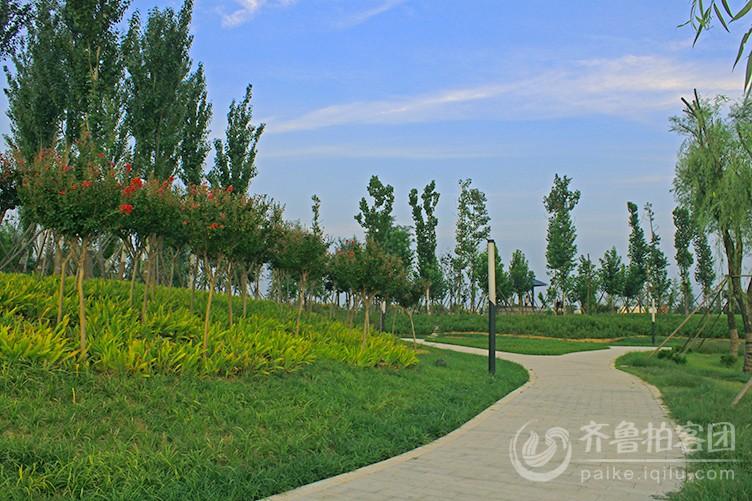 绿树蓝天 - 济宁拍客 - 齐鲁社区 - 山东最大的城市