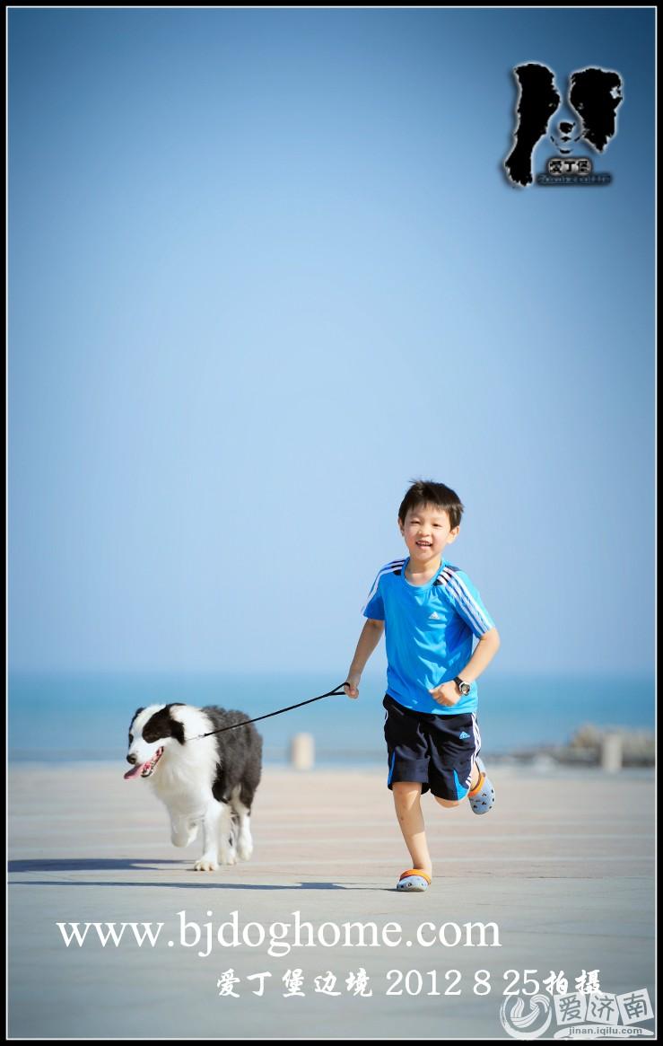 边境牧羊犬雷诺和小朋友海边外拍