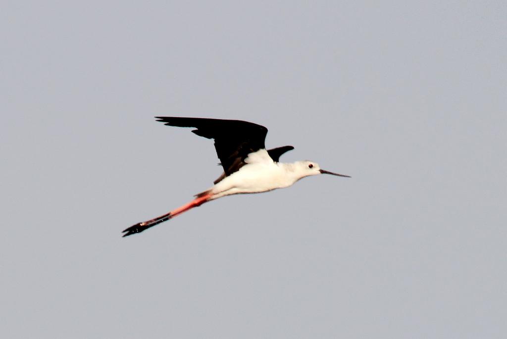 壁纸 动物 鸟 鸟类 摄影 桌面 1024_685