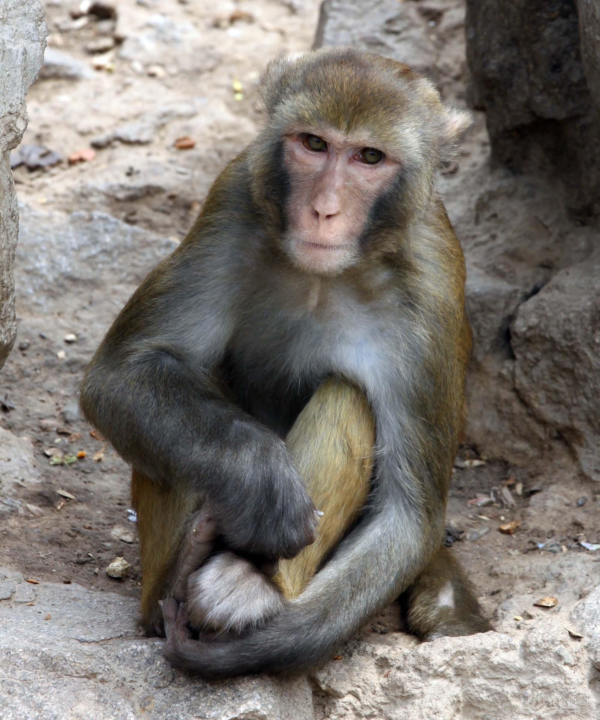 可爱的猴子系列之四(寂寞的猴王)