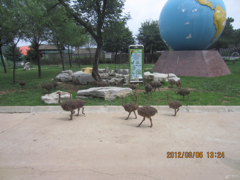 自驾济南跑马岭野生动物园