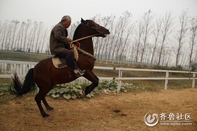 壁纸 动物 马 骑马 650_433