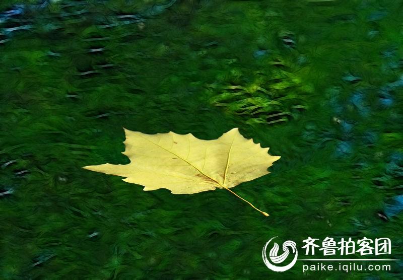 唯美小树叶