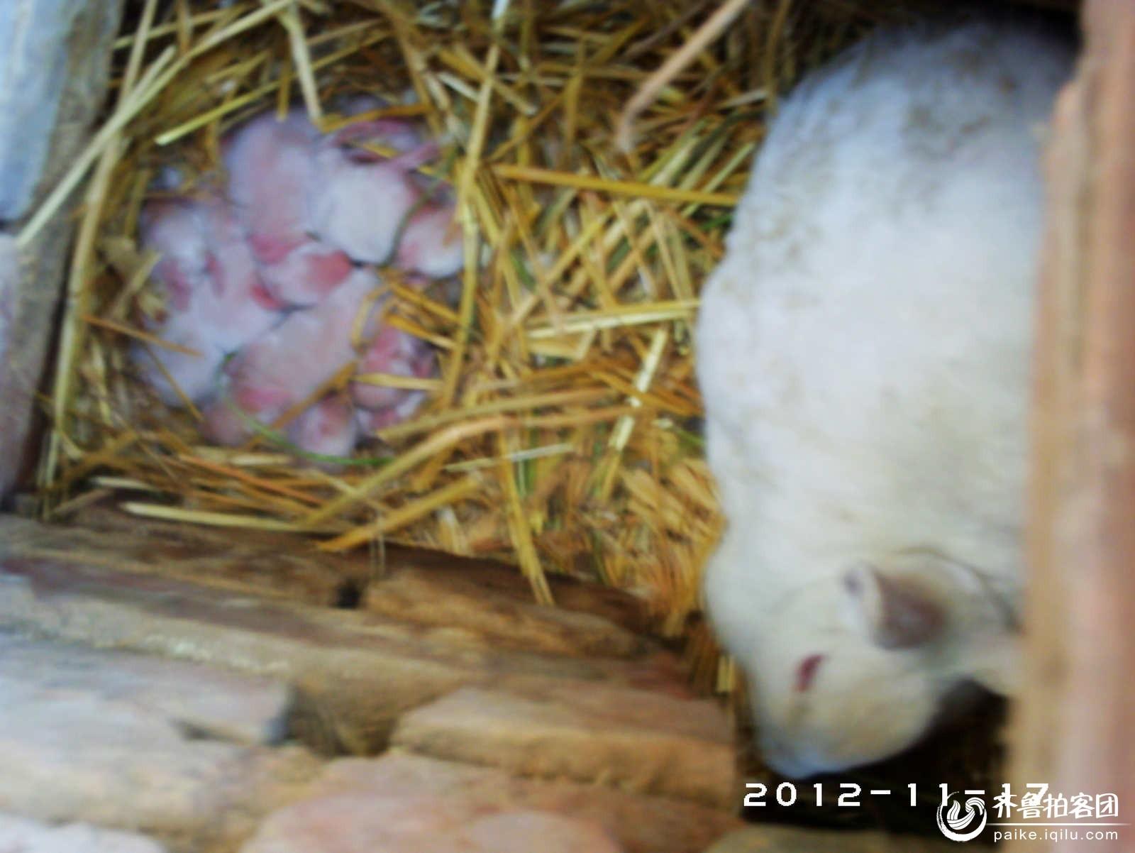可爱的兔宝宝