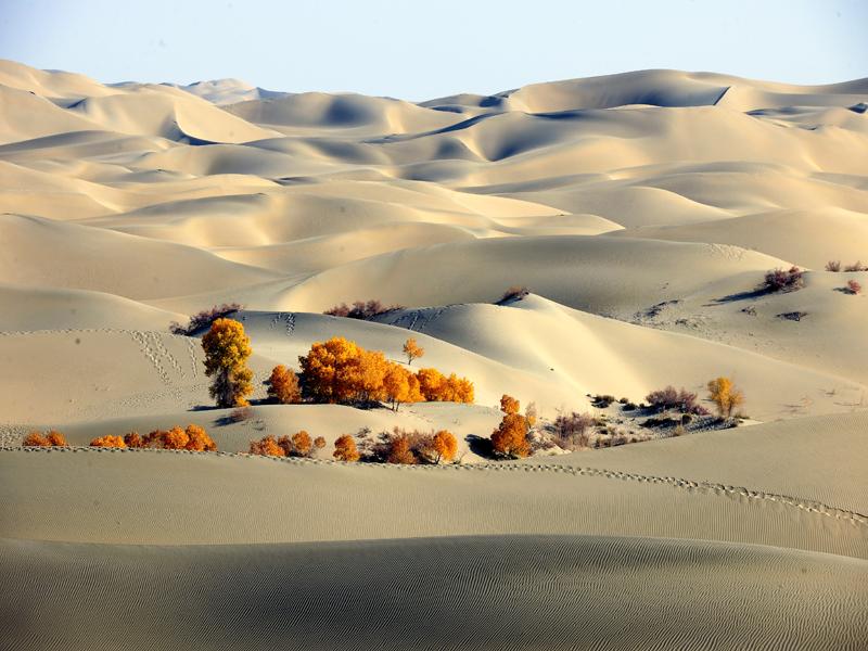 新疆胡杨沙漠风景 新疆胡杨沙漠风光 新疆沙漠胡杨照片-新疆风景沙漠图片