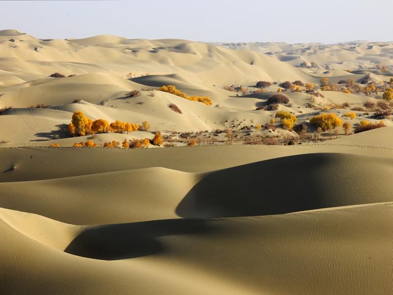 新疆沙漠胡杨照片 新疆胡杨沙漠风景 新疆胡杨沙漠风光 新-新疆沙漠图片