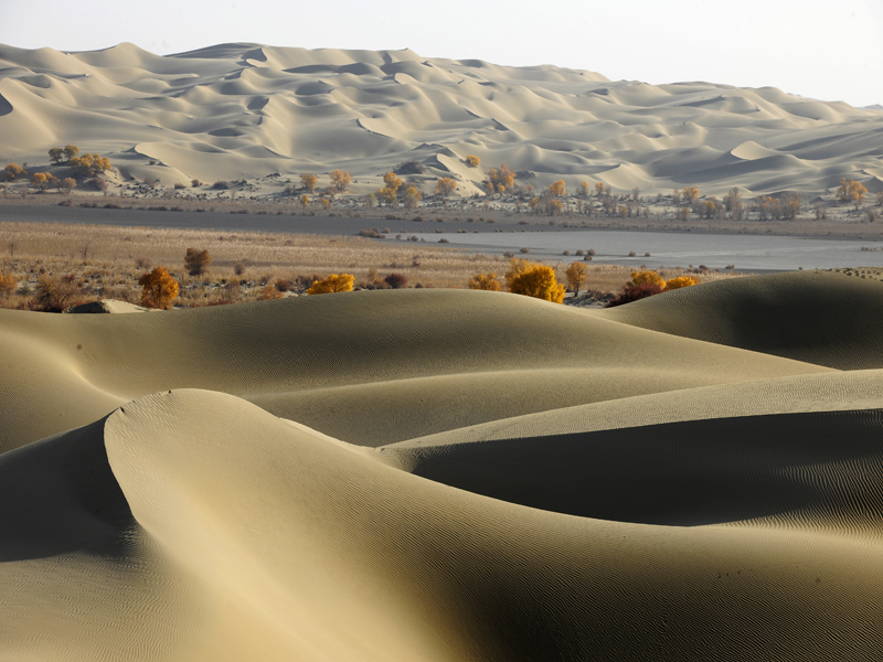 新疆胡杨沙漠风景 新疆胡杨沙漠风光 新疆沙漠胡杨照片-新疆沙漠风景图片
