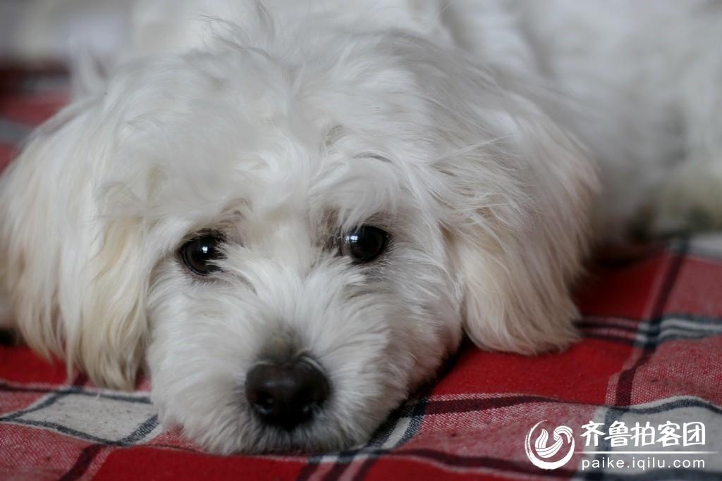 可爱的宠物狗 山东最大的城市生活社区,山东广播电视台官方