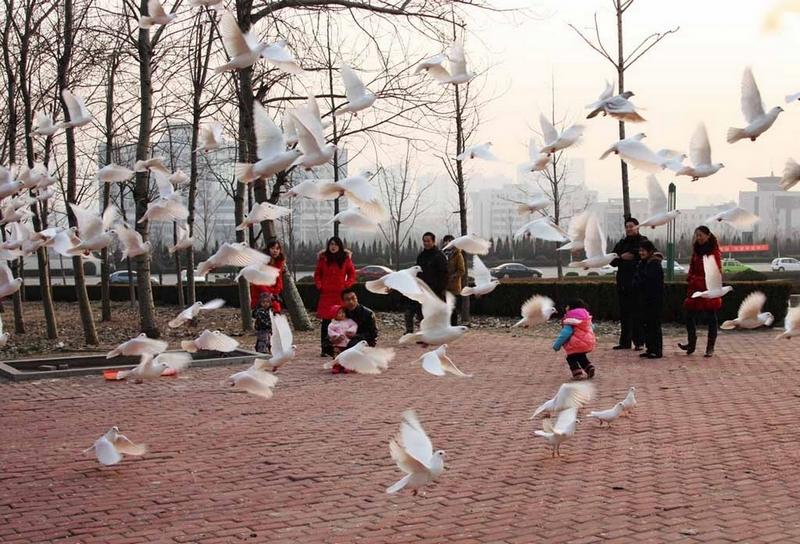 IMG_0326鸽舞蹁跹人和谐.jpg