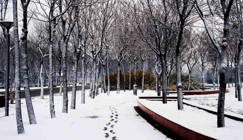 春之雪.jpg