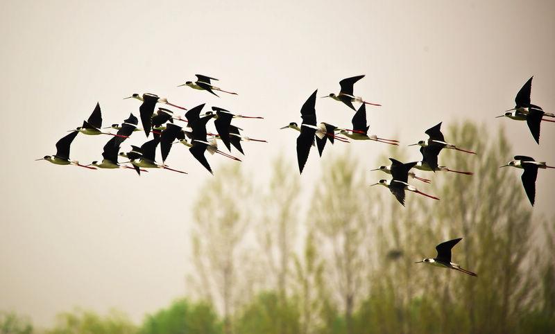 飞翔--徐炳书摄.jpg