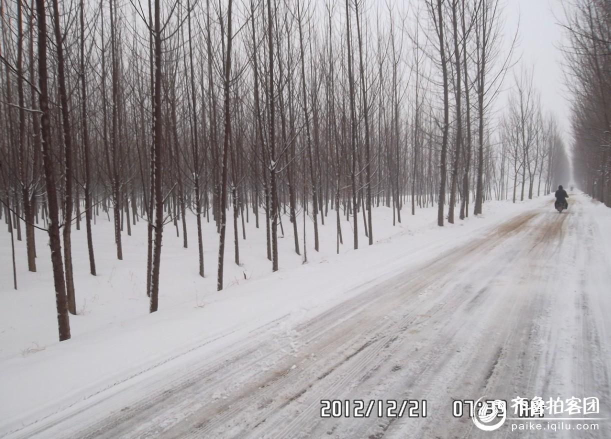 但是,那片片白杨树,仍然屹立在世界末日的皑皑白雪中