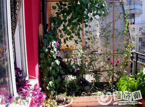 10平小花园设计实景图