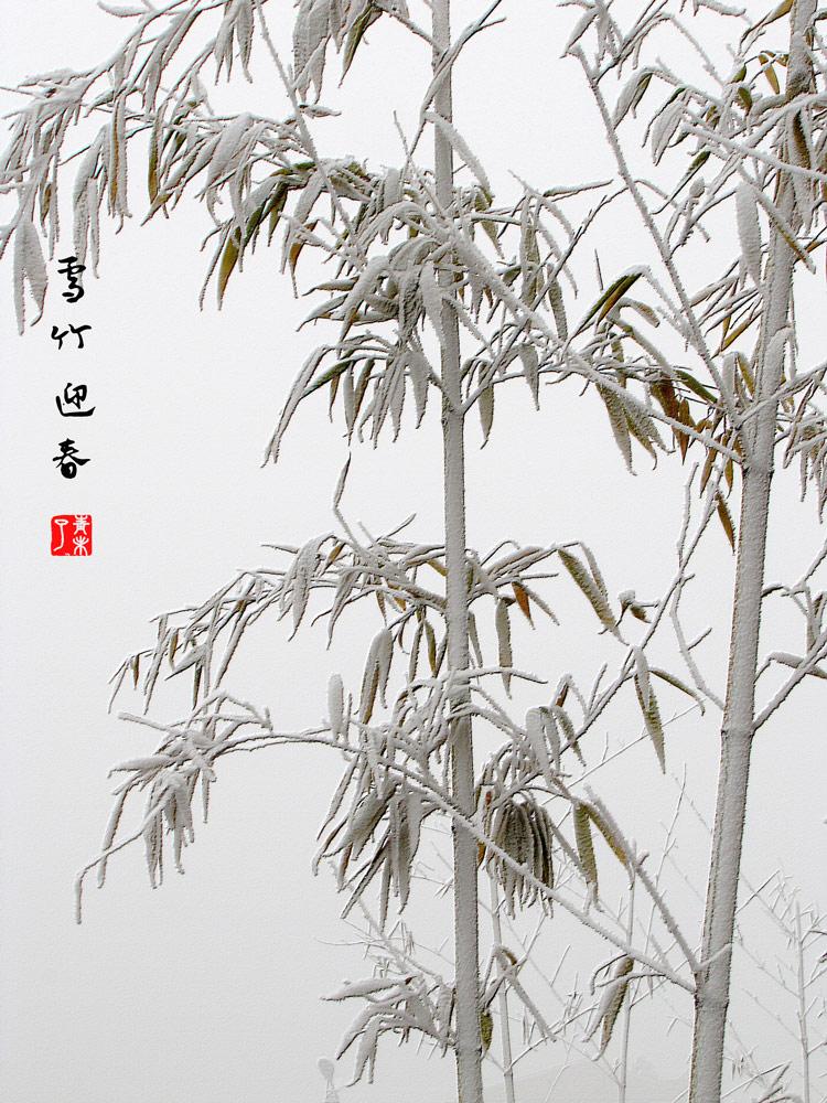 11页:青未了摄:IMG_3770qqqa.jpg
