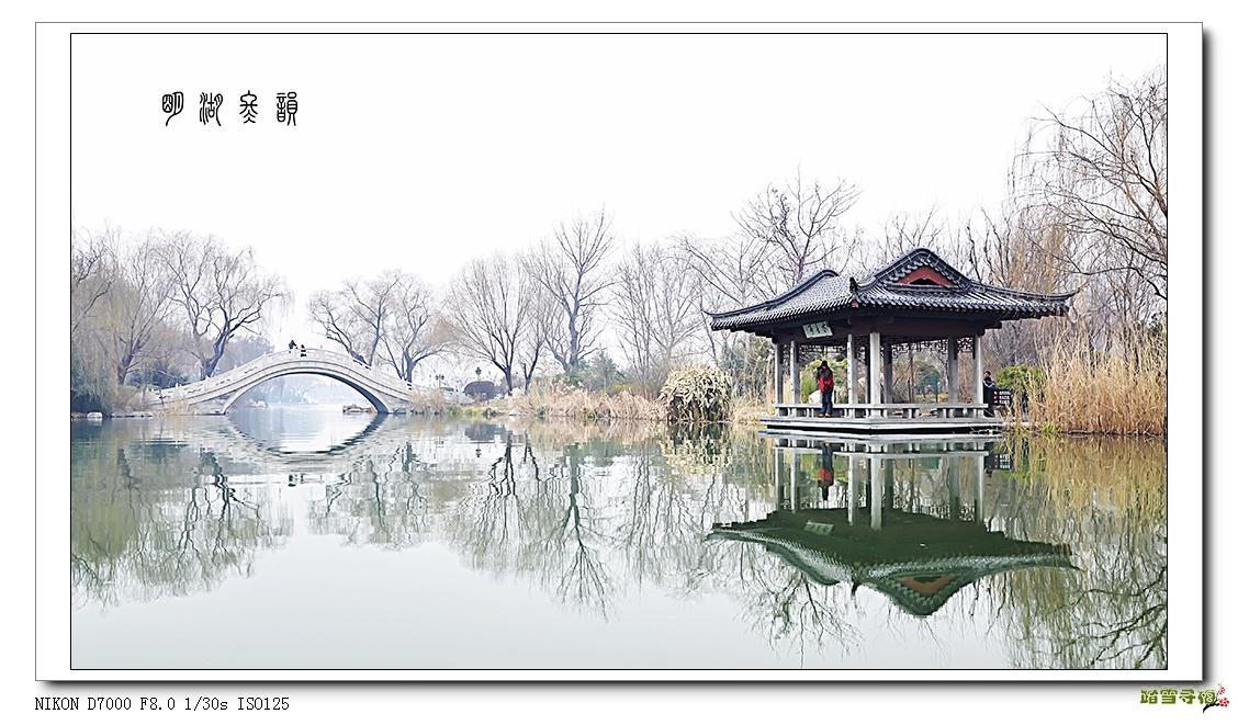12页:~踏雪~寻梅~摄:明湖冬韵.jpg