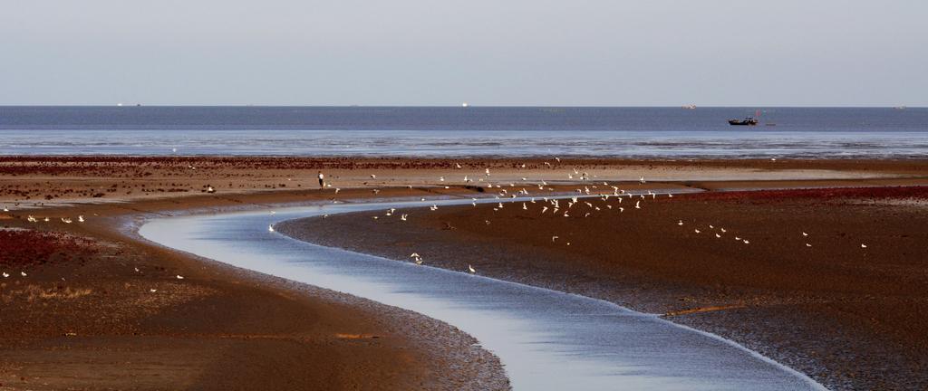 12页:紫藤姐姐摄:2012.09.18.东营海岸线.jpg