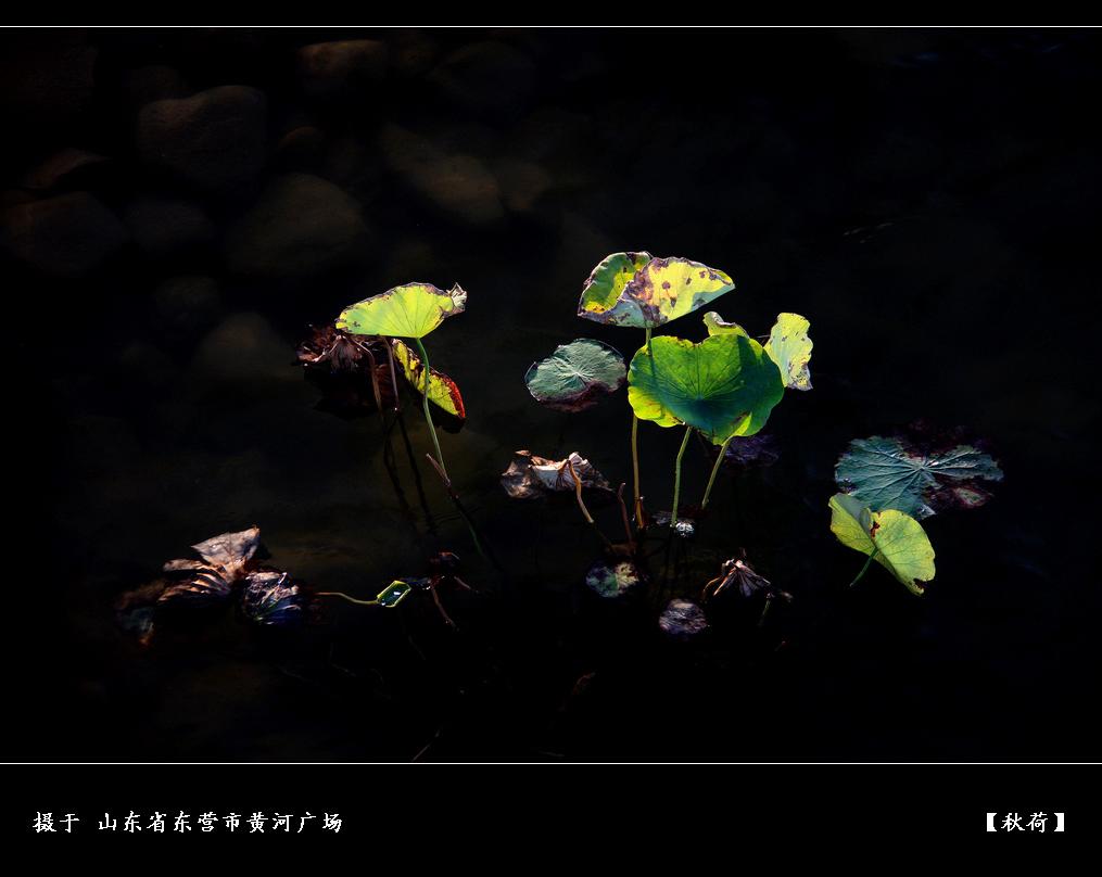 20页:虎摄:【秋荷】.jpg