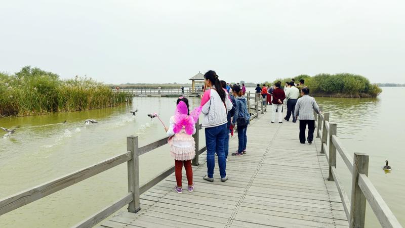 我也要飞-拍摄于黄河口