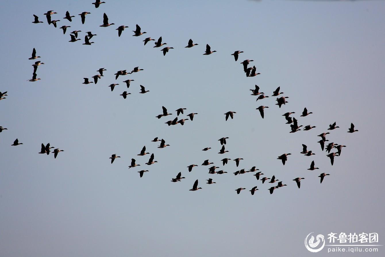 南飞的大雁简笔画图片
