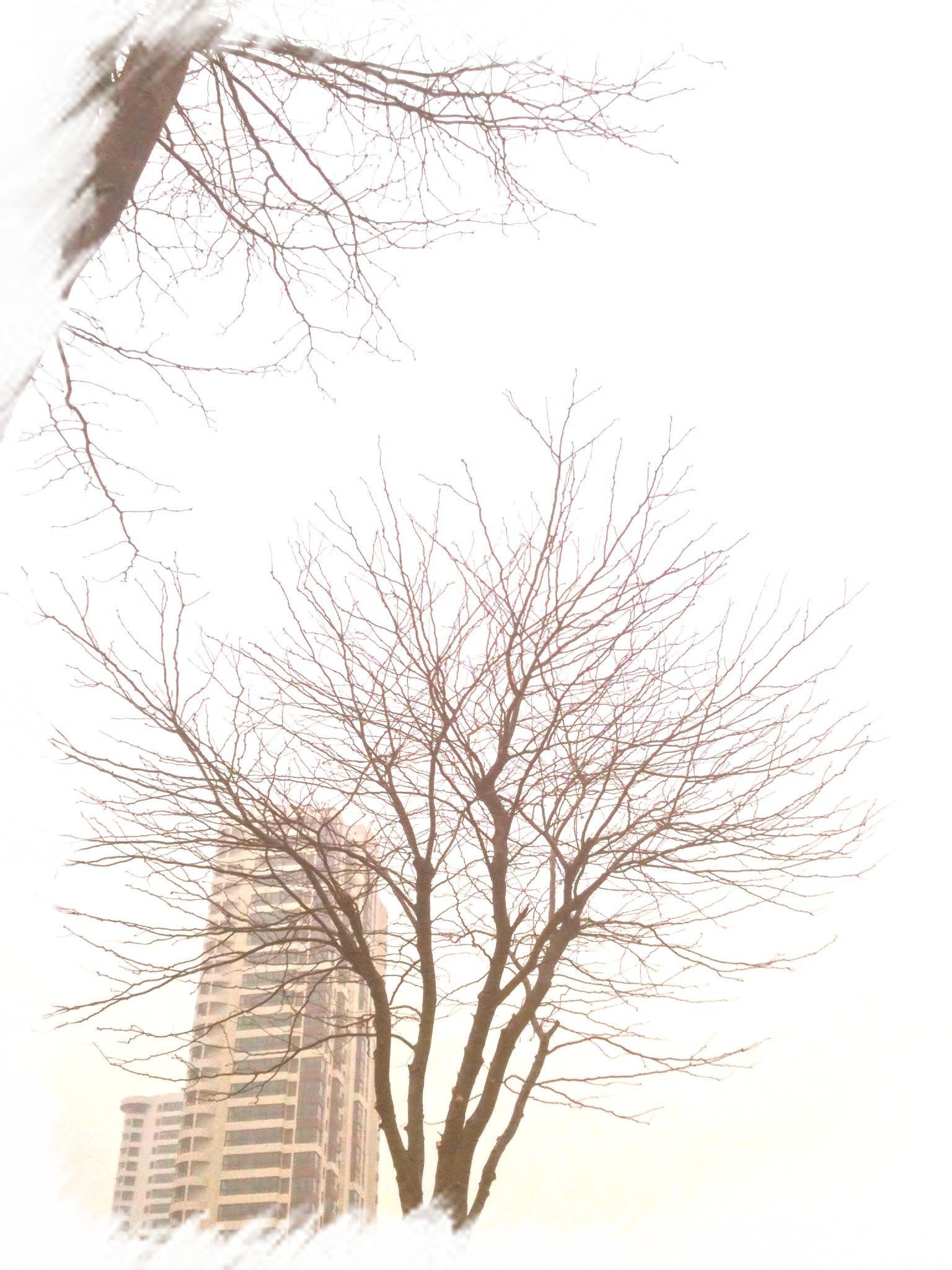 手绘松树观立面图