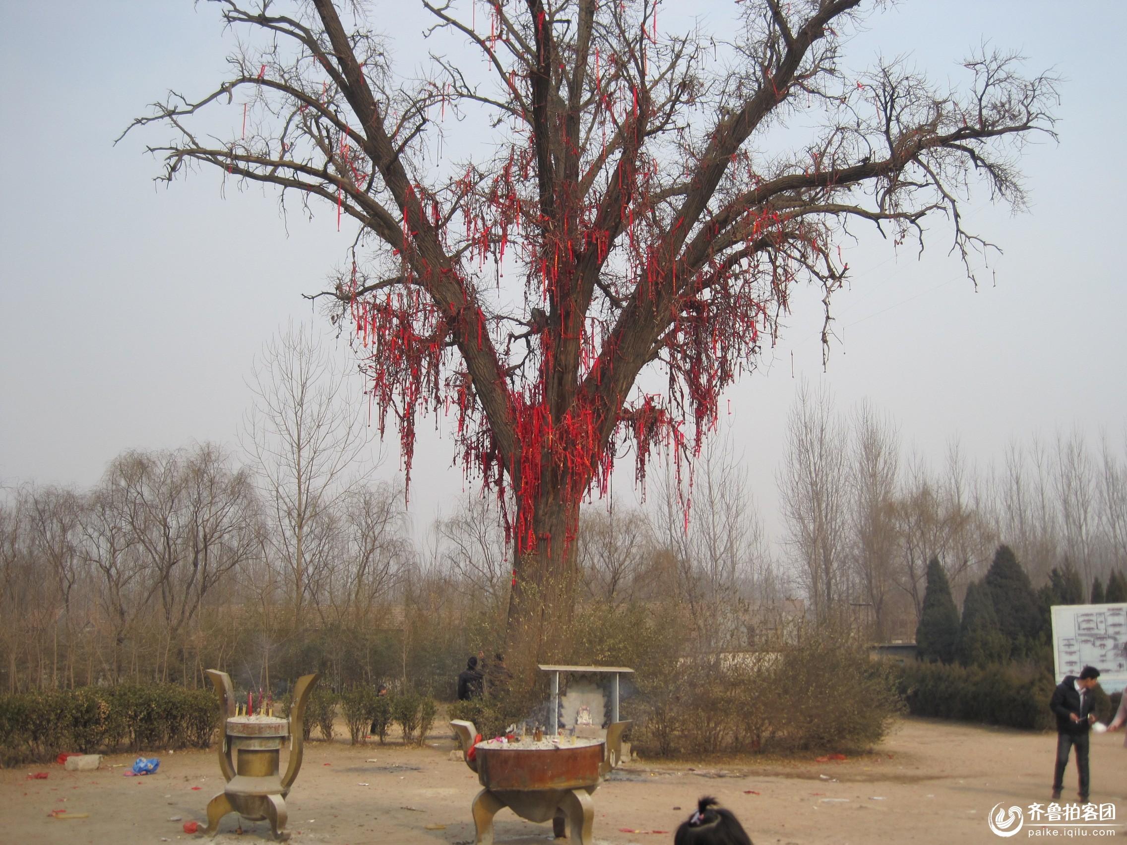 树头红长什么样子