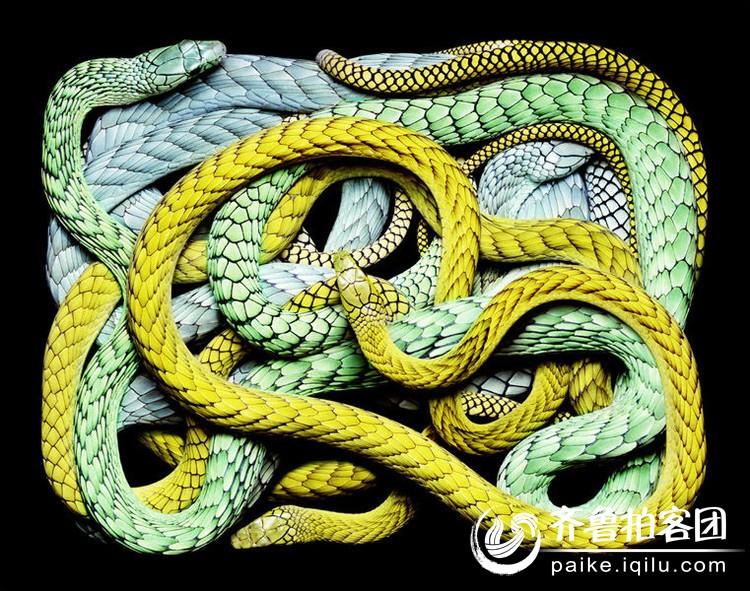 菏泽拍客 69 蛇艺术  分享到:qq空间新浪微博腾讯微博人人网微信qq