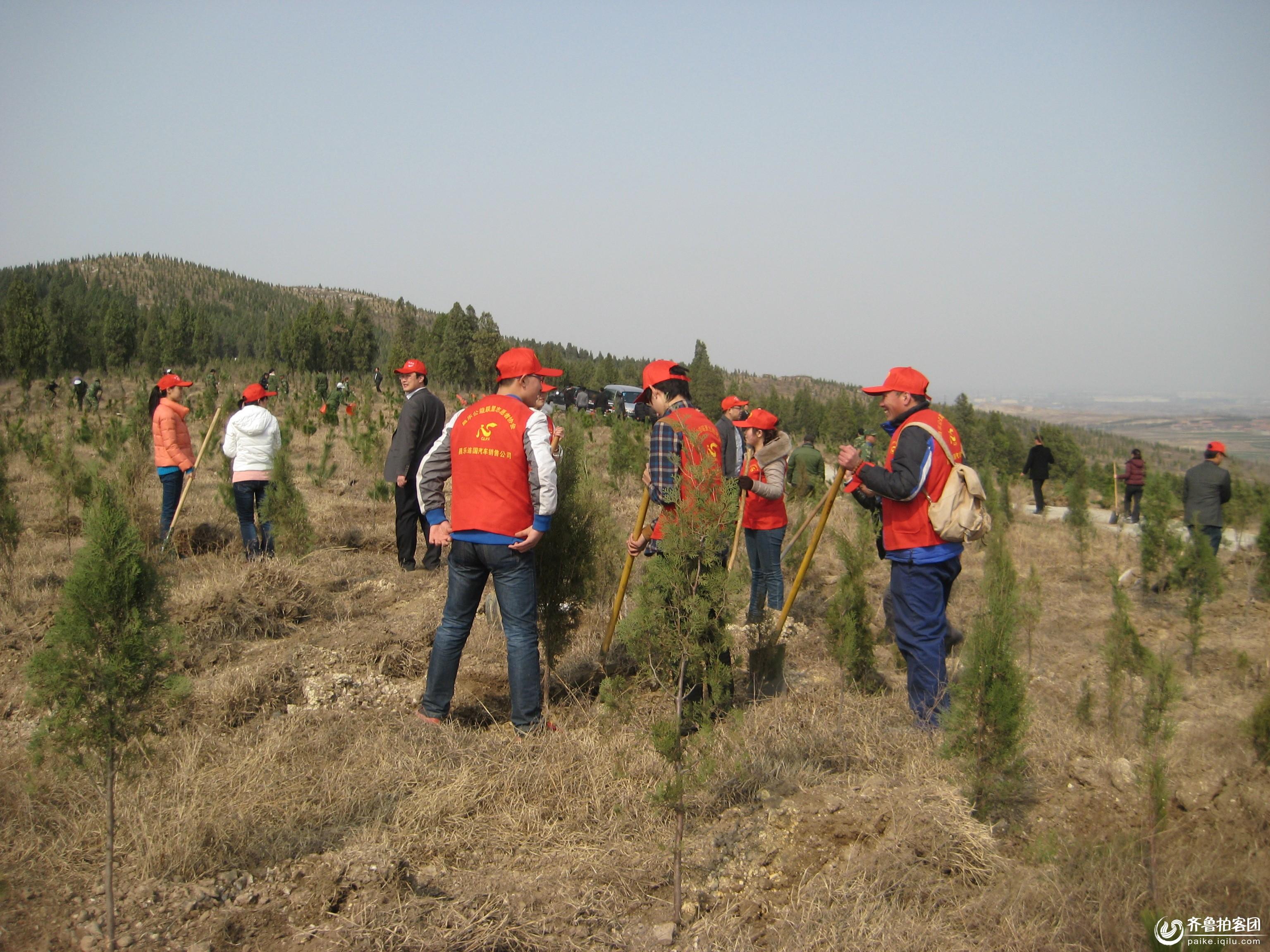 昌乐公益联盟志愿者和齐鲁拍客昌乐站植树活动纪实
