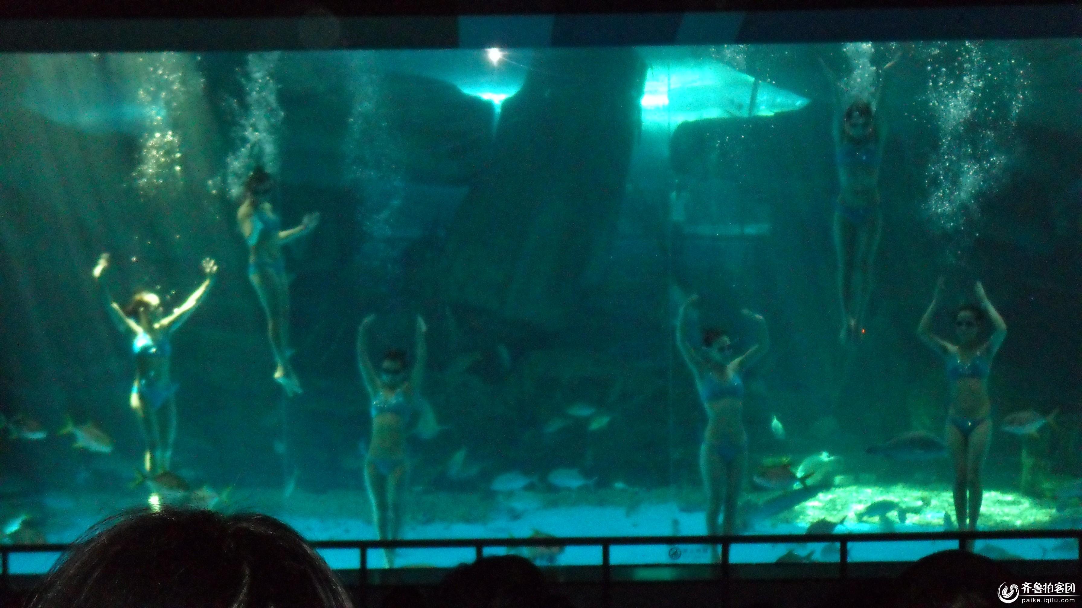 齐鲁拍客团 69 聊城拍客 69 美论美换的海底世界  分享到:qq空间