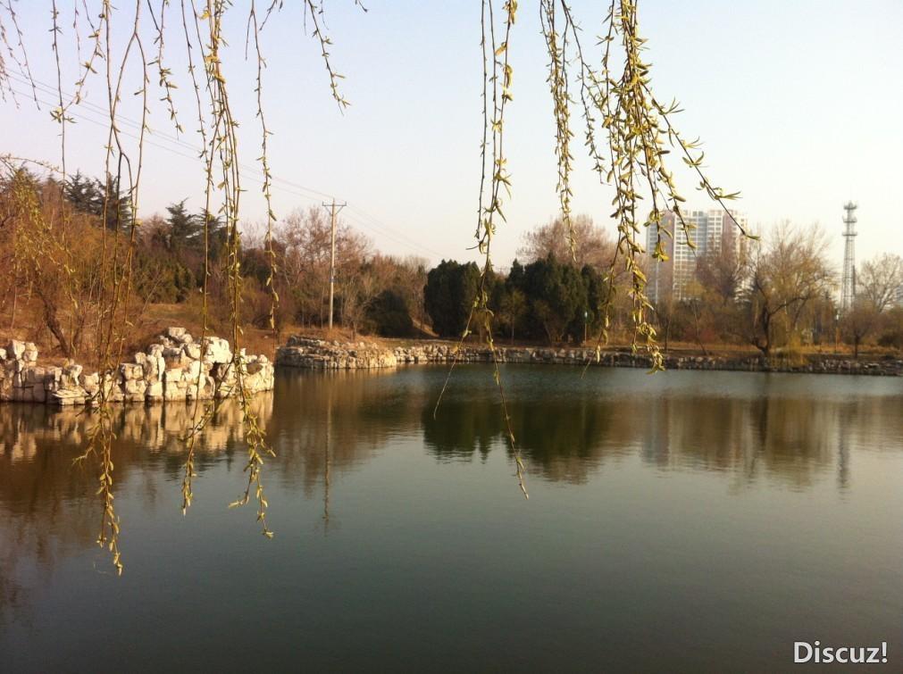 春天让湖边的柳树绿了