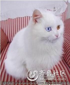 首页 资讯 滚动资讯 03自己选的猫咪,哭着也要宠下去  自己选的猫咪