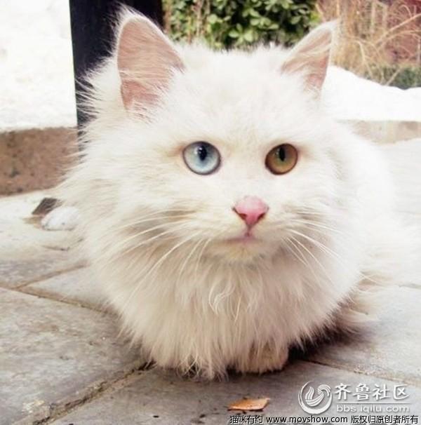 男生抱白猫头像