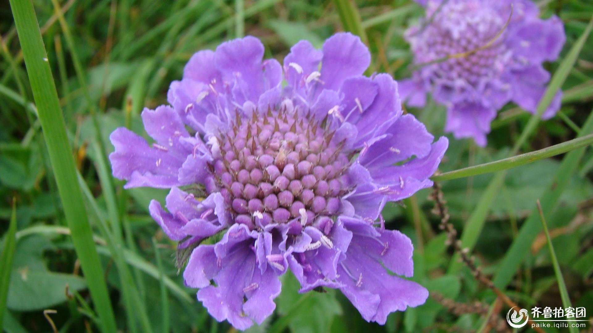 紫色小花朵微信头像