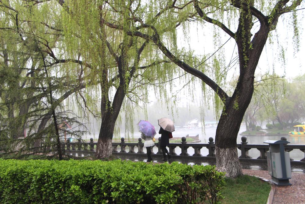 清明时节雨纷纷!【百脉泉雨中风景】【1】 - 风光