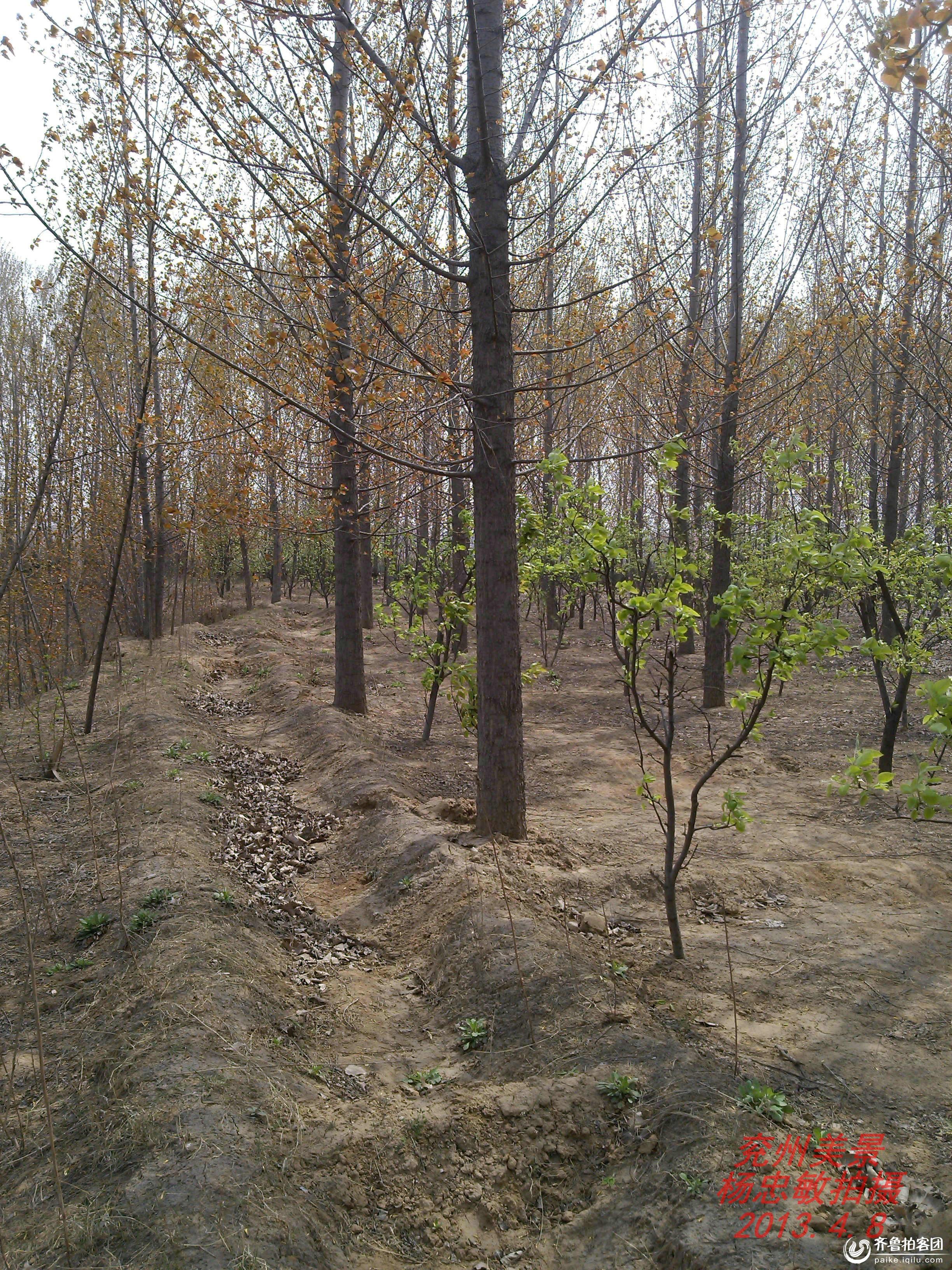 兖州美景:幽静的小树林