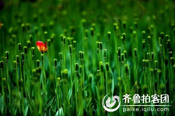 万绿从中一点红