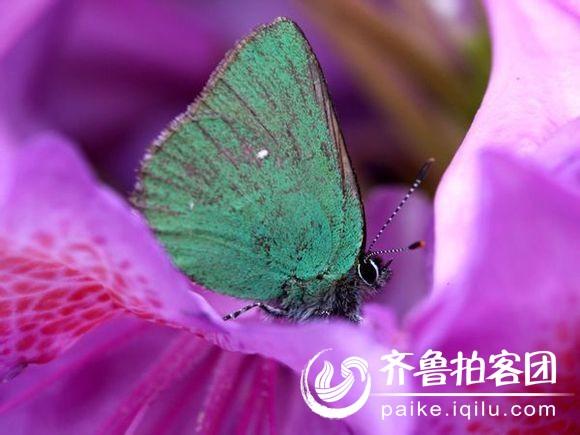 最美的蝴蝶