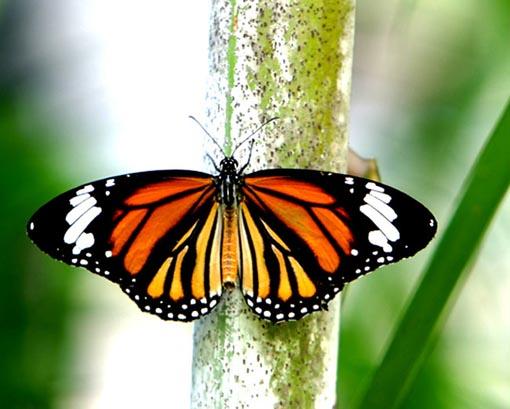 蝴蝶生长过程步骤