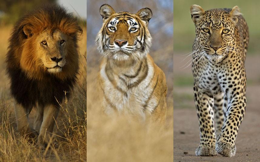 野生动物世界的原始与野性之美[24p]