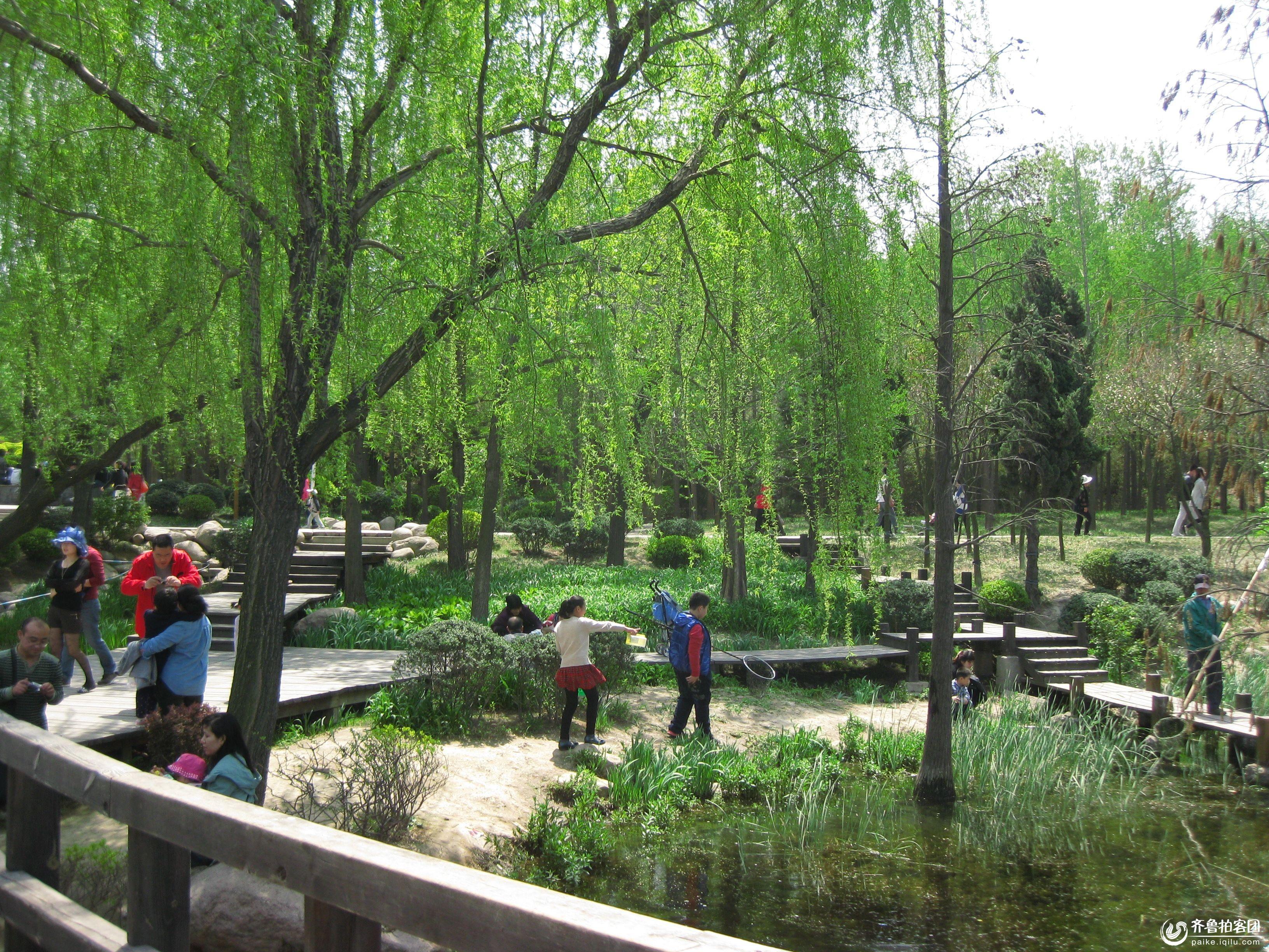 【近郊游】李村文化公园---花与绿树的海洋
