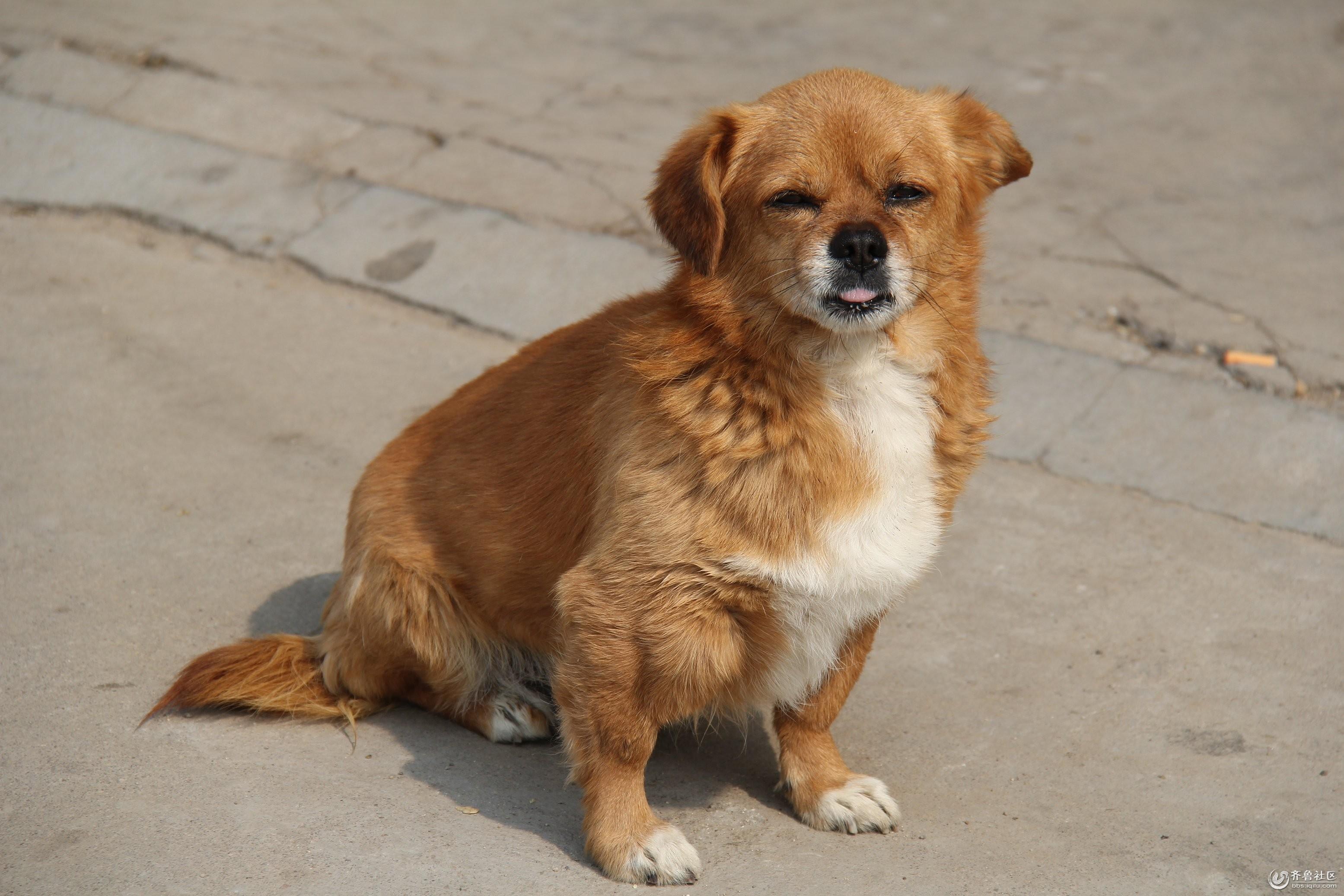 小狗狗表情多多 - 东营论坛