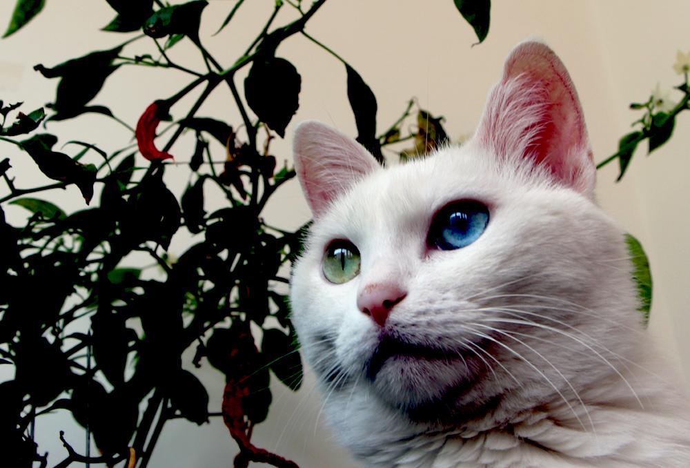 我家的可爱猫咪【2】  分享到:qq空间新浪微博腾讯微博人人网微信qq