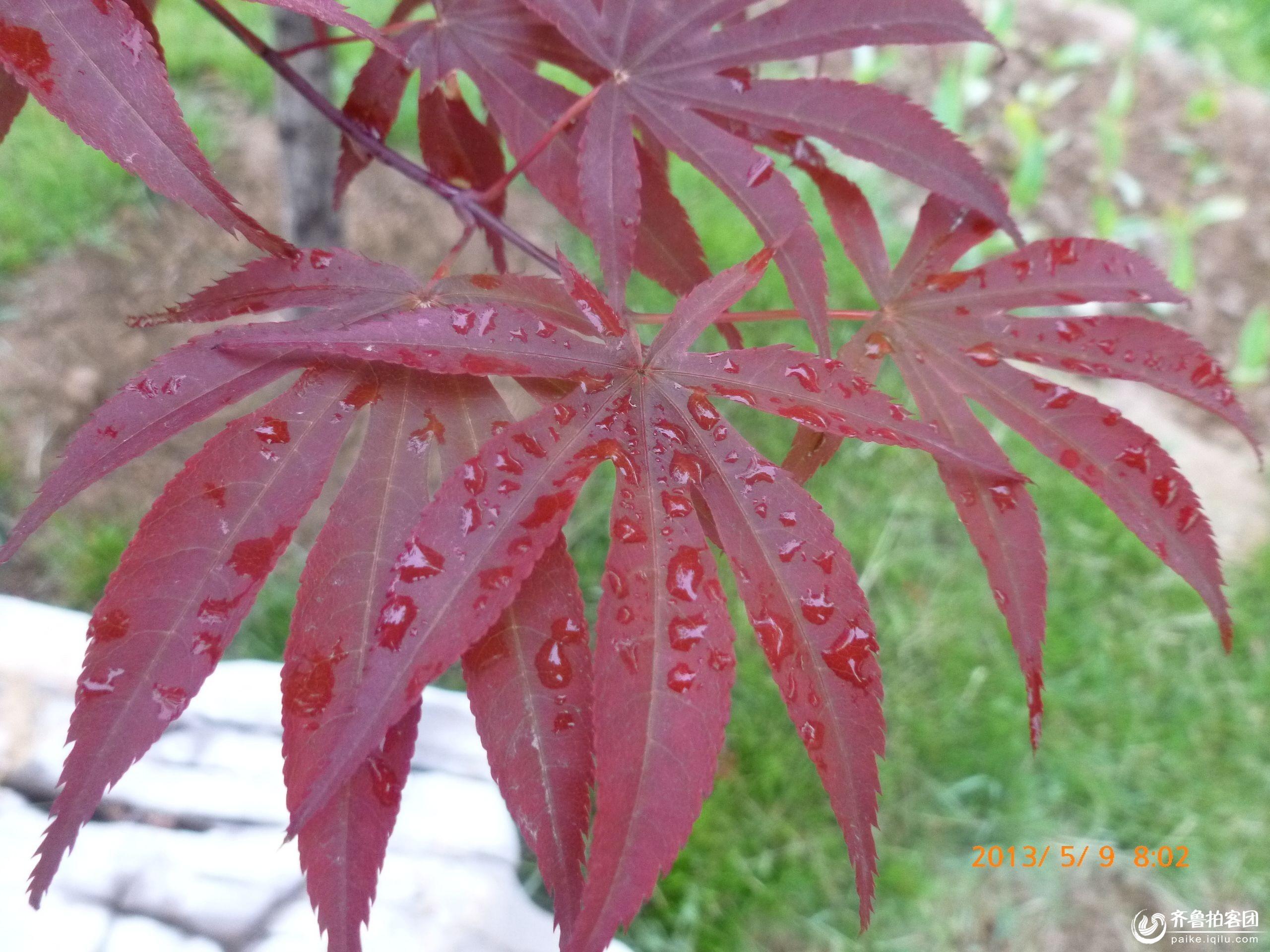 雨中绿叶微信头像