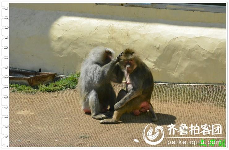 威海西霞口神雕山野生动物园